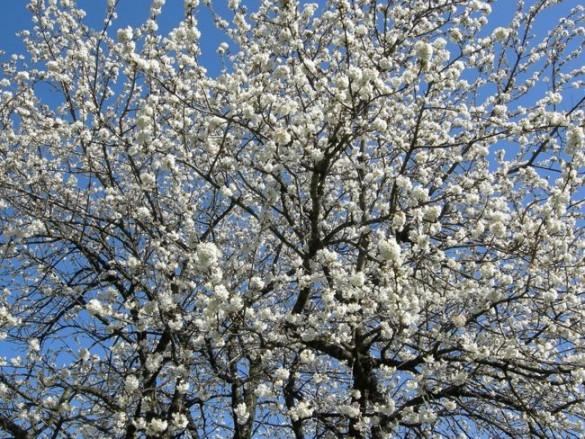 Gartenjahr-Blumen-01