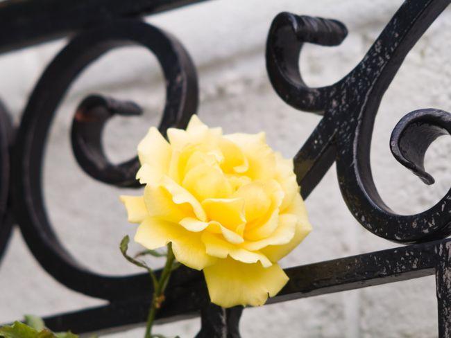 willkommen im gartenjahr 2012 friedrichs gartenjahr friedrichs gartenjahr auss en pflanzen. Black Bedroom Furniture Sets. Home Design Ideas