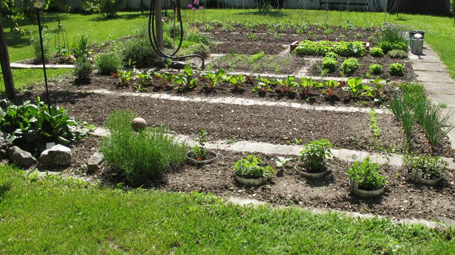 03 gemuesegarten im mai 2012 auss en pflanzen gie en und genie en. Black Bedroom Furniture Sets. Home Design Ideas