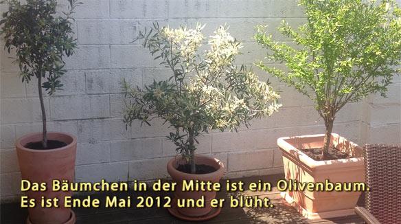 olivenbaum und bienen auss en pflanzen gie en und genie en. Black Bedroom Furniture Sets. Home Design Ideas