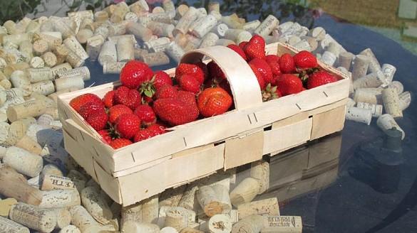 Erdbeeren (Ananas) aus dem Burgenland
