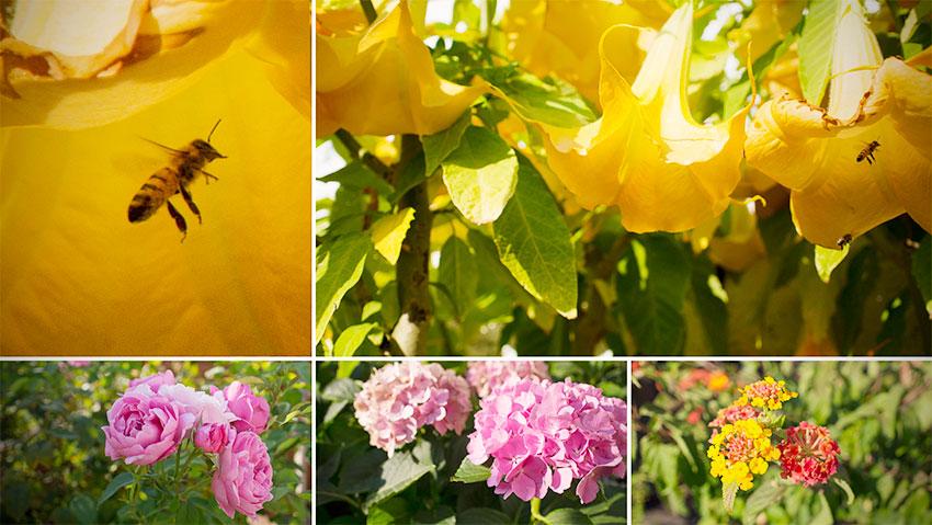Die Farben des Sommers im Garten