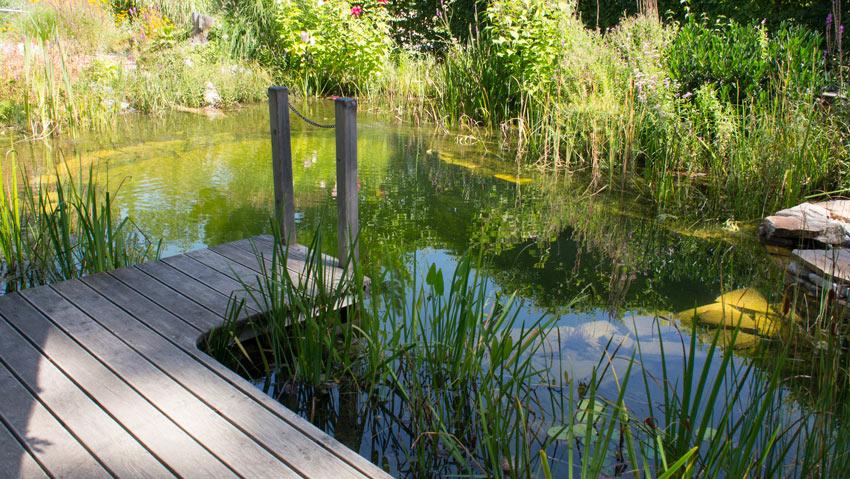 Schwimmteich 02 tulln die garten 2012 auss en pflanzen for Garten pool tulln