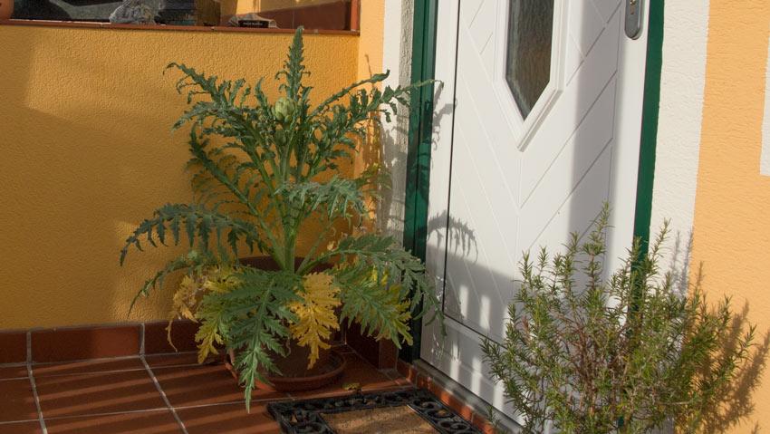 artischocke im burgenland 01 auss en pflanzen gie en und genie en. Black Bedroom Furniture Sets. Home Design Ideas