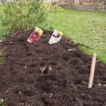 Knoblauch und Zwiebel im Herbst einpflanzen