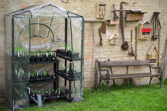 Paradeiser-Tomaten auspflanzen