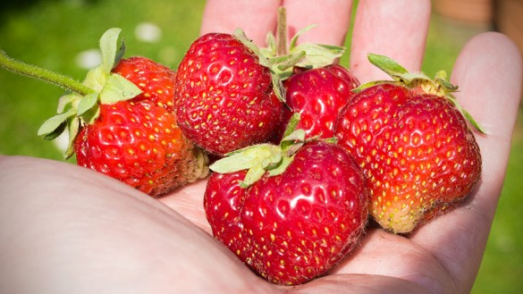 Ananas-Erdbeeren-Burgenland