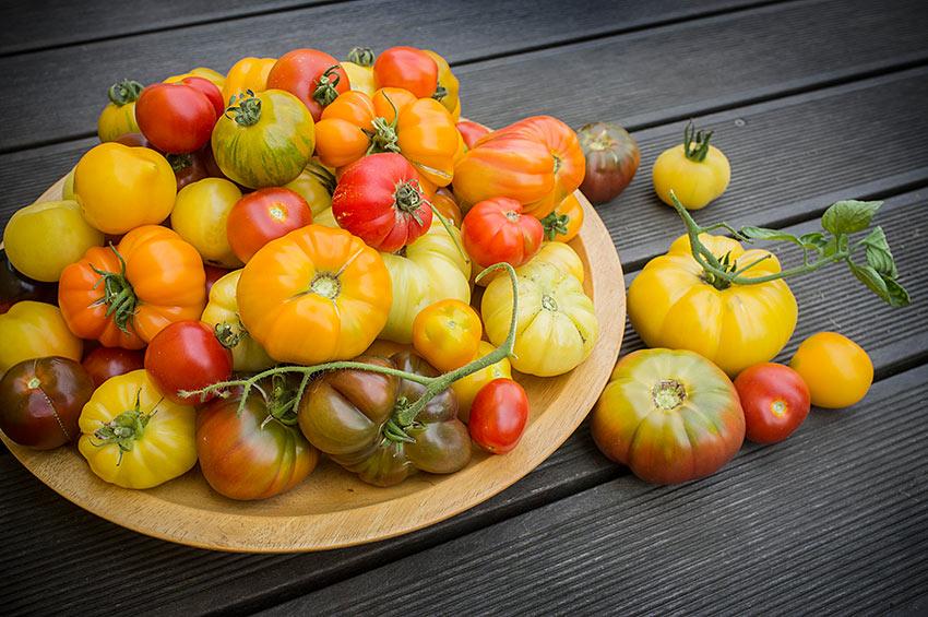 Vielfalt an Tomaten