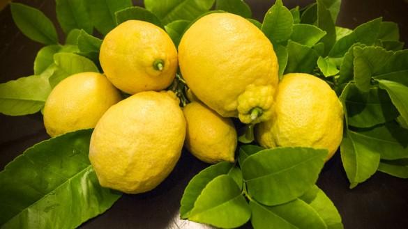Zitronen im Bburgenland: unsere Eernte