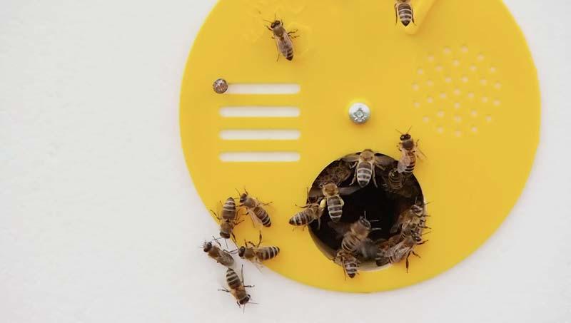 Honigbienen-Carnica-2014