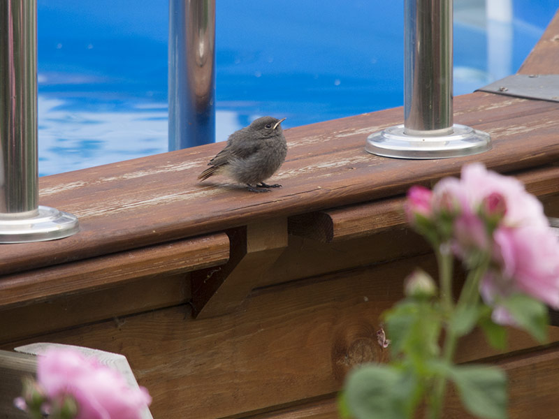 Junge Vögel!