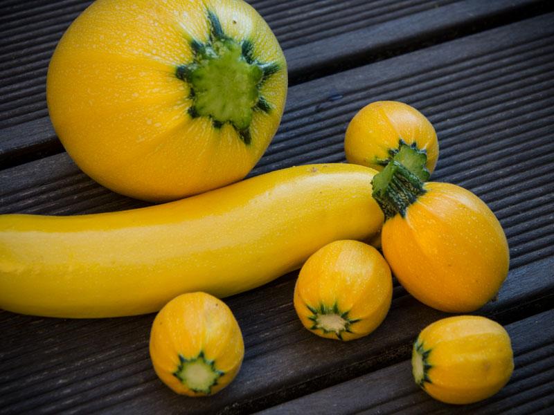 gelbe zucchini friedrichs gartenjahr auss en pflanzen gie en und genie en. Black Bedroom Furniture Sets. Home Design Ideas