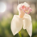 Internationale-Gartenbaumesse-Tulln-2014-Orchidee