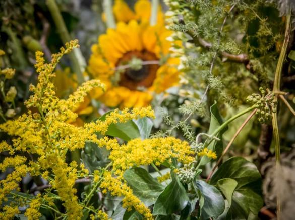 Internationale-Gartenbaumesse-Tulln-2014-Sonnenblume