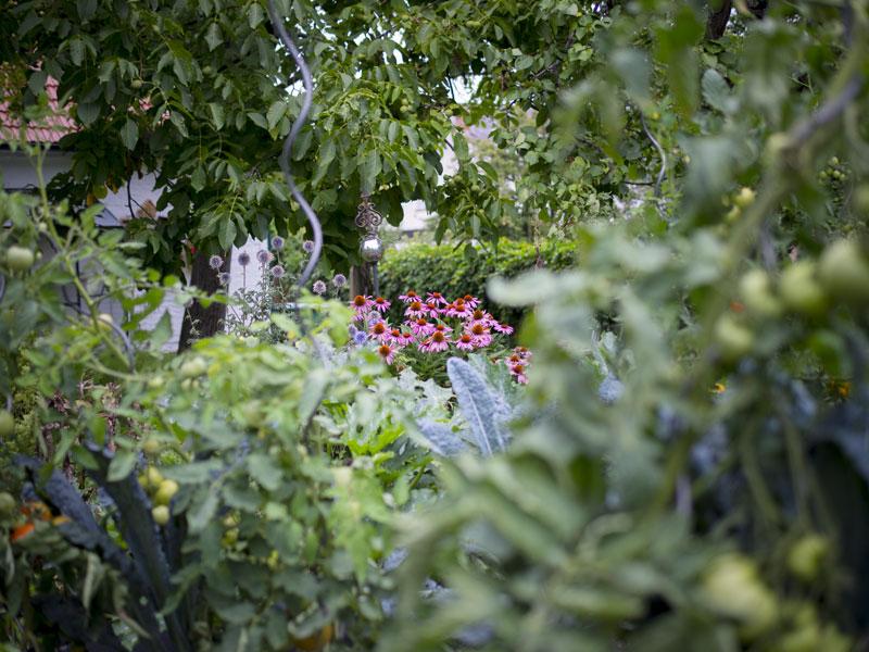 sonnenhut echinacea 02 auss en pflanzen gie en und genie en. Black Bedroom Furniture Sets. Home Design Ideas