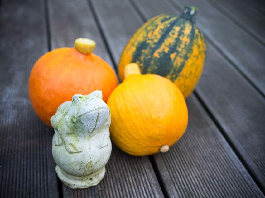 Hokkaido, Zucchini und ein Frosch