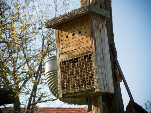 Wildbienen lieben unsere Insektenhotels!