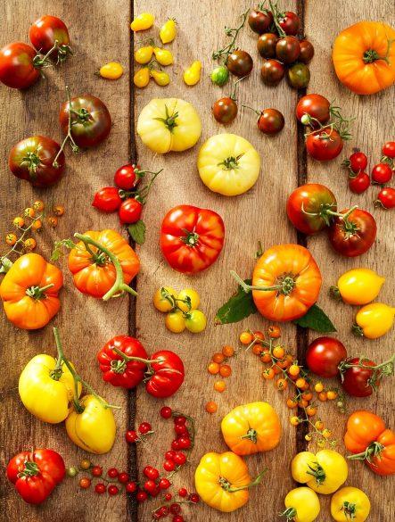 Vielfalt an Tomaten in Burgenland