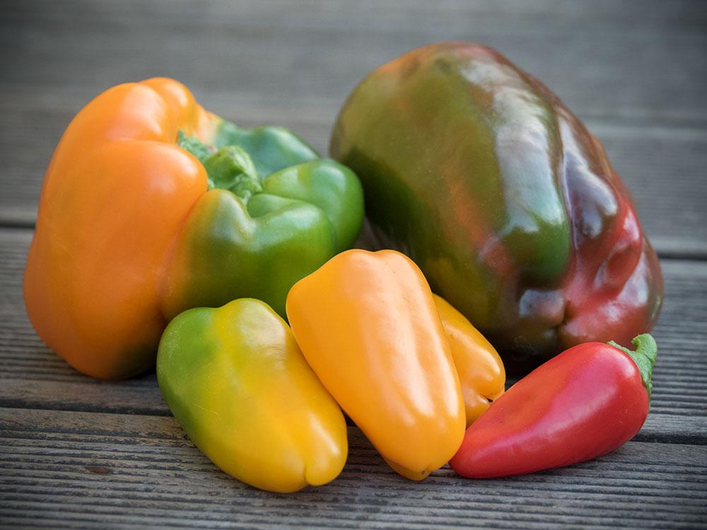 Paprika: Multicolore