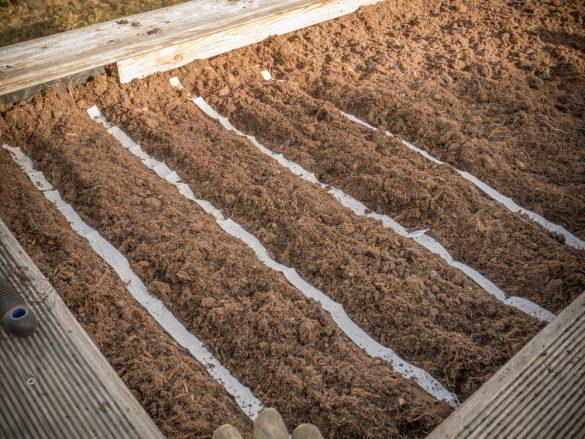 Saatbänder für Vogerlsalat, Radieschen, Petersilie und mehr