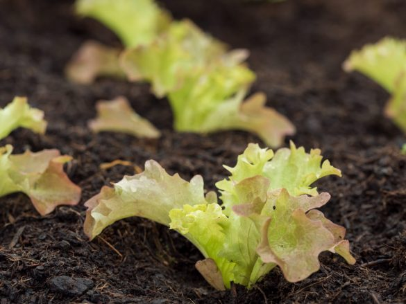 Salat ist gesund – und schmeckt super!