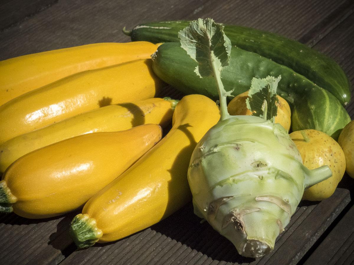 Gurken-Zucchini-Kohlrabi-Ernte-Juli-2017