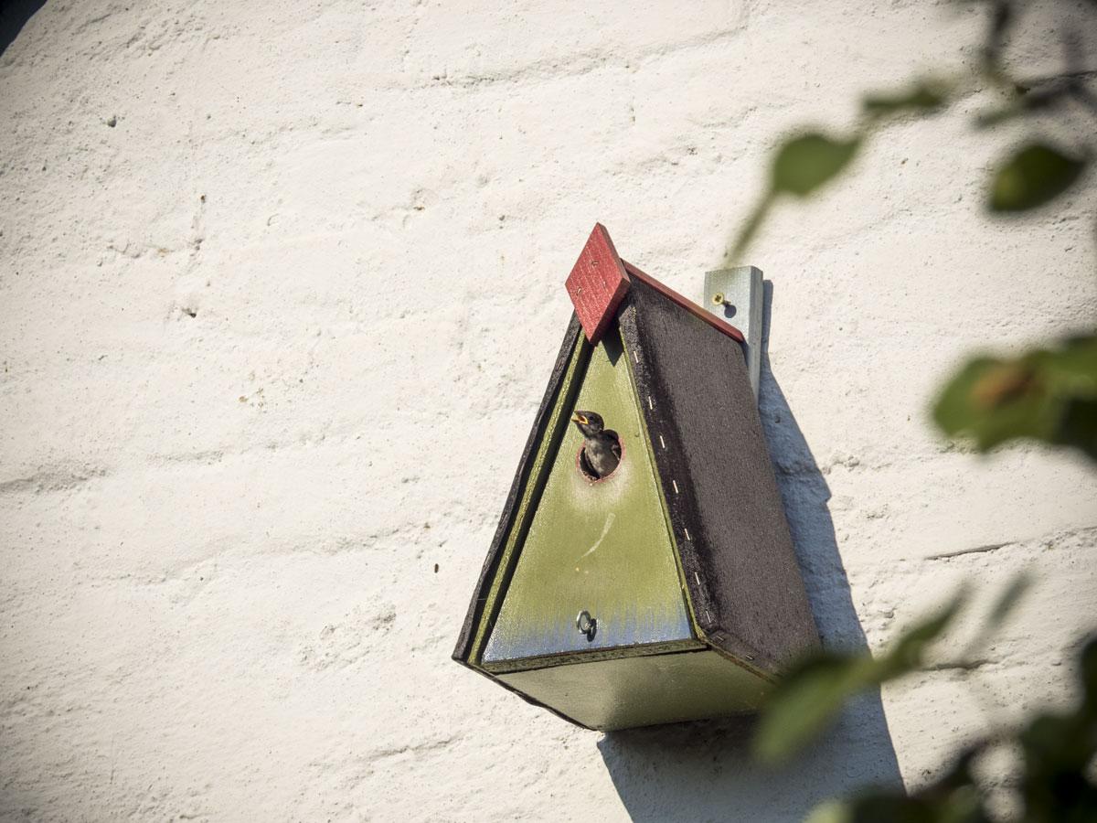 ein kleiner Vogel wird bald flügger-Vogel-wird-fluegge-.jpg