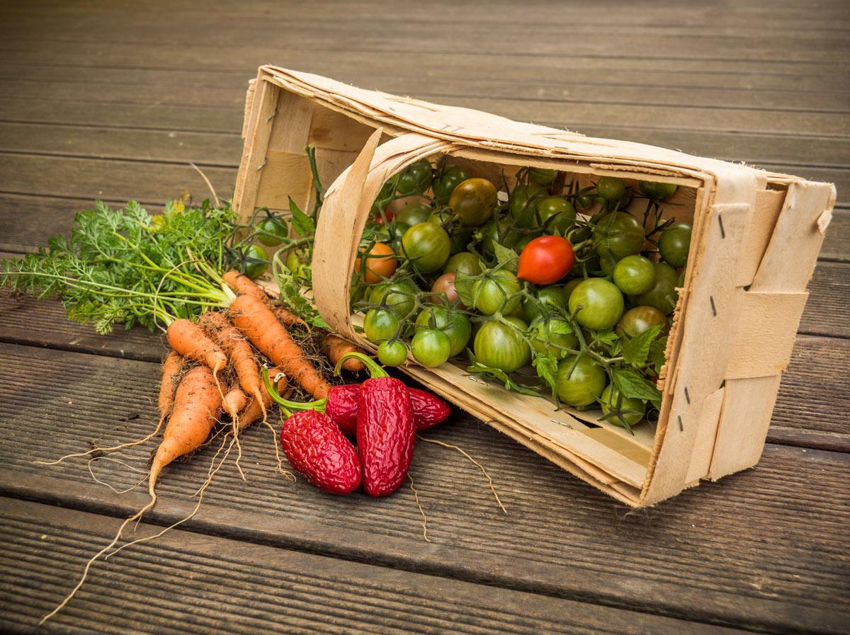 Gemüse-Ernte Herbst 2017