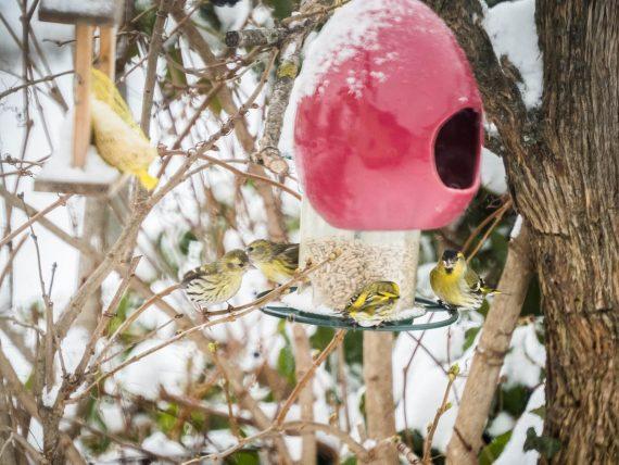 Winterliche Vogelparade: Das Video