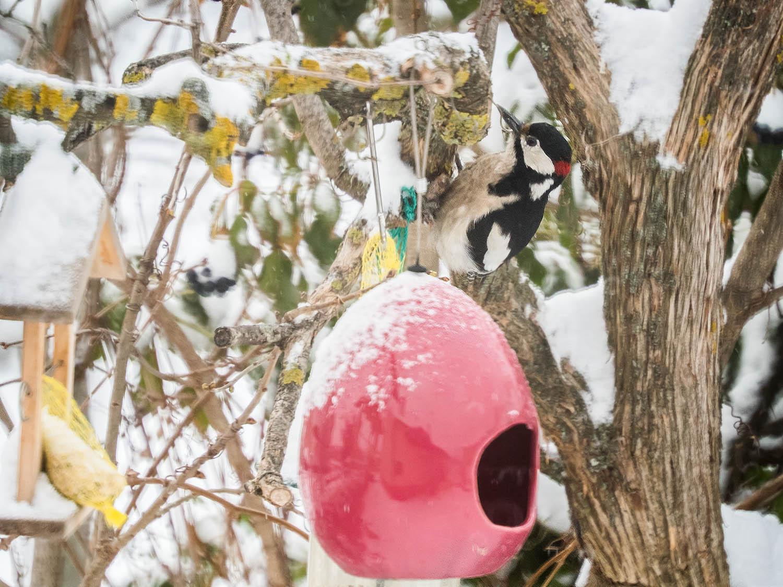 Winterliche Vogelparade