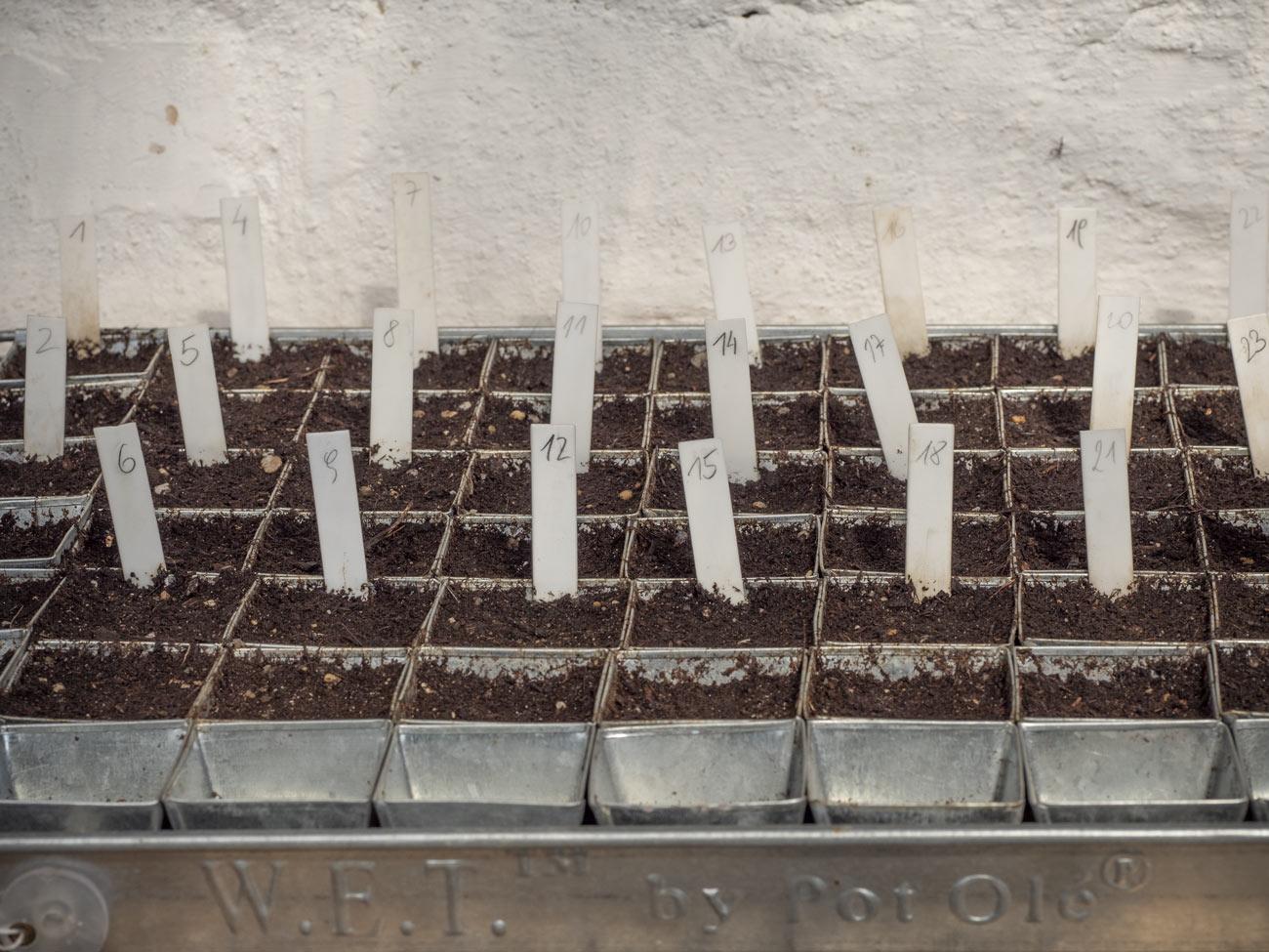 Paradeiser-Tomaten-aussäen-2018