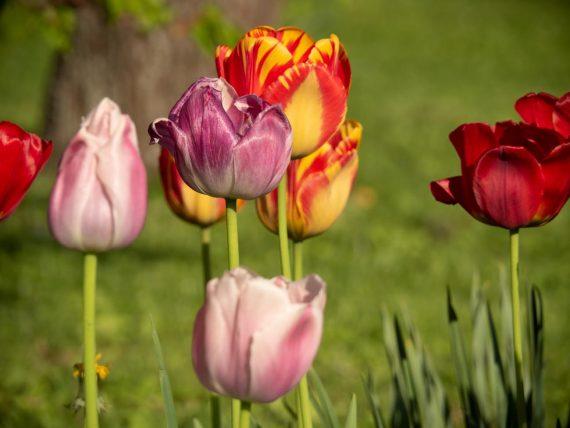 Frühlingsblüher – Frühlingsfarben