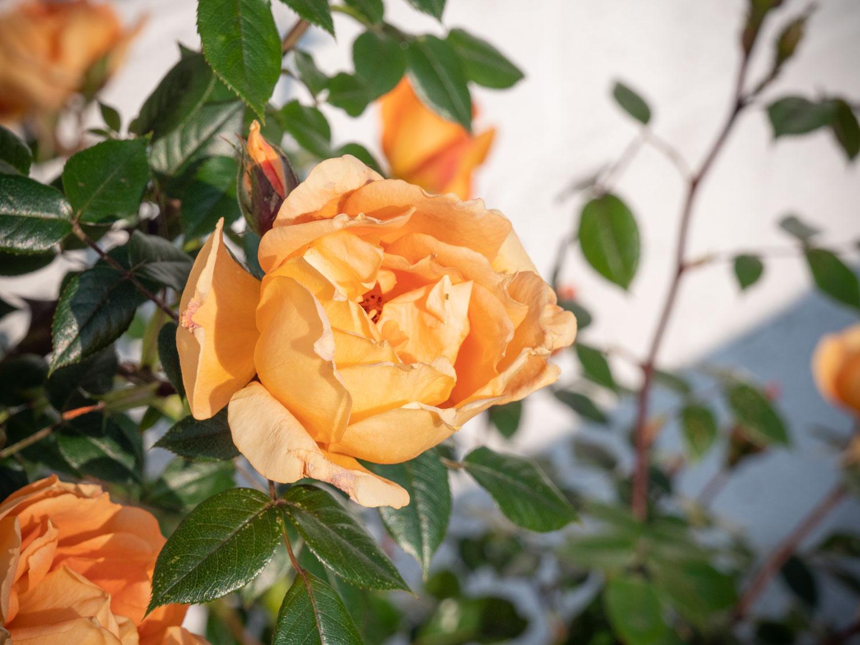 Garten Blog Garten Tipps österreich Aussäen Pflanzen Gießen Und