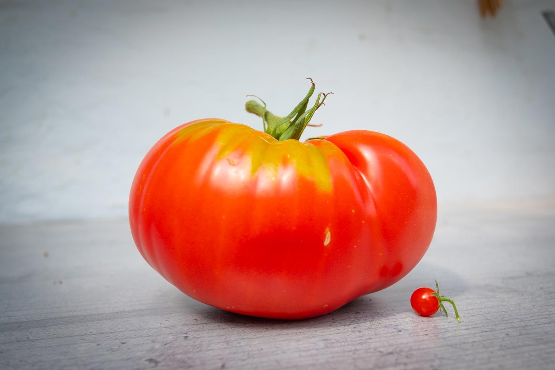 Paradeiser-Marmande-Johannisbeer-Tomate-Paradeiser-Vergleich