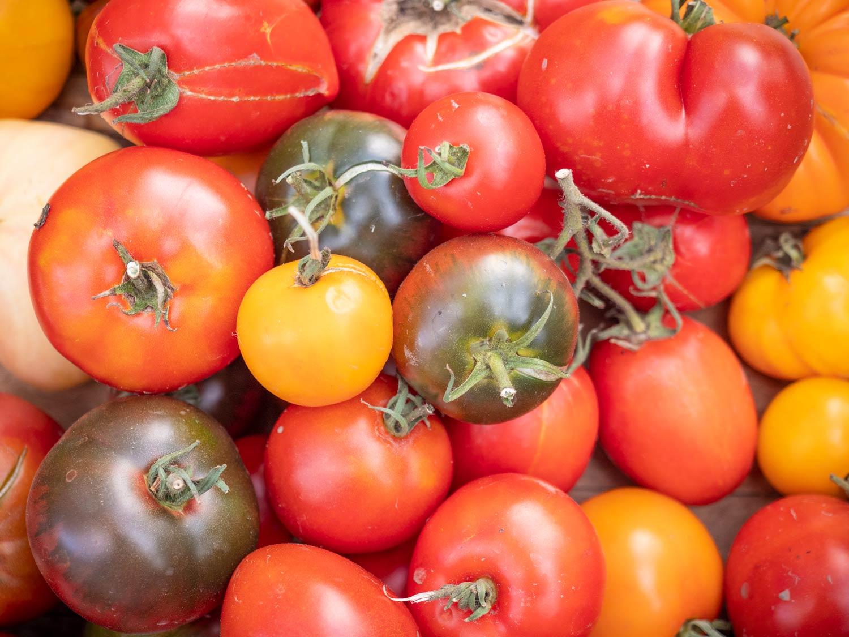 Paradeiser-Tomaten-ernten-2019