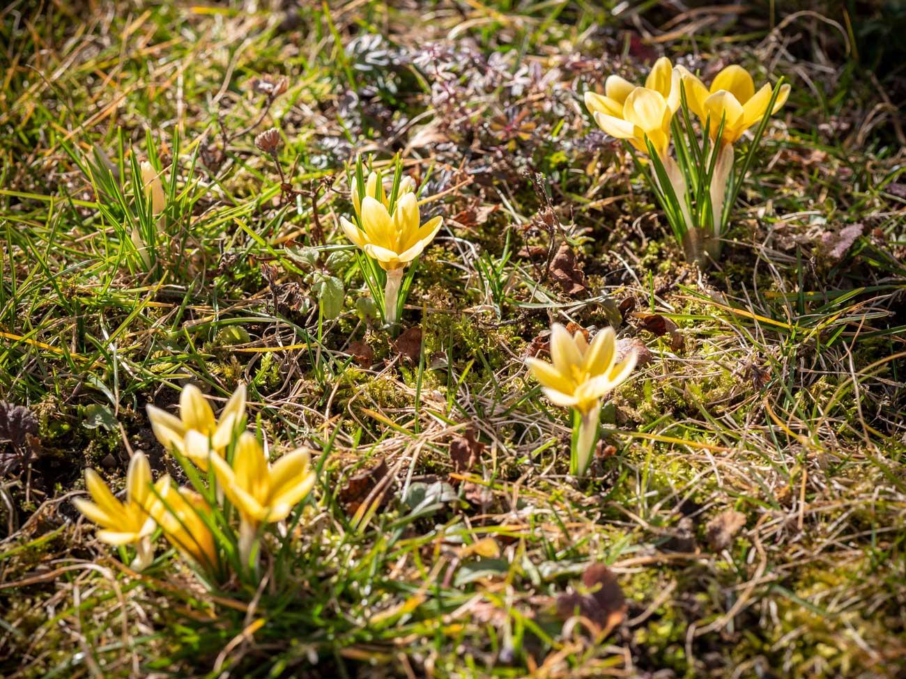Frühling mitten im Winter?