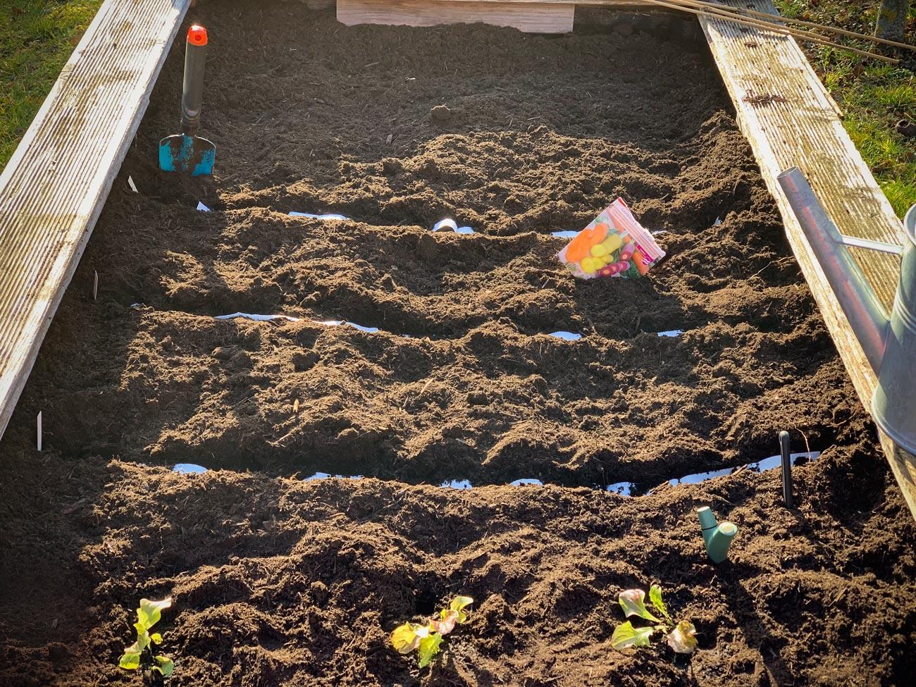 Hochbeet mit Karotten und Pflücksalat: Die erste Aussaat (2020)