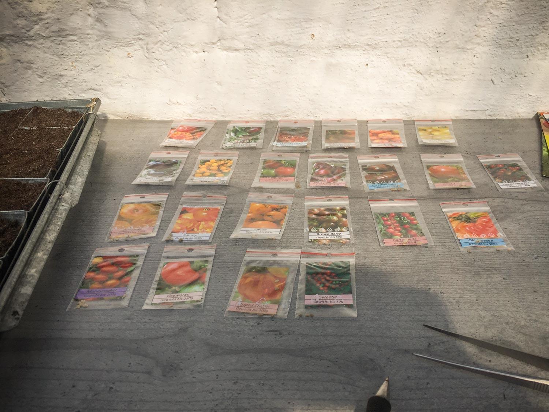 Paradeiser-Tomaten-Samen-aussaen-viele-Sorten-02