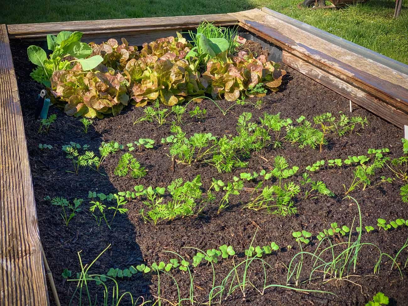 Gemüse und Co im Hochbeet Anfang April