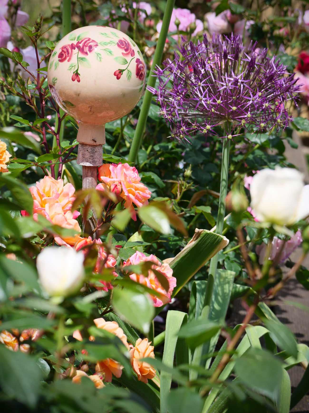 Zierlauch-Alium-Rose-Biene-2020IMG_3788