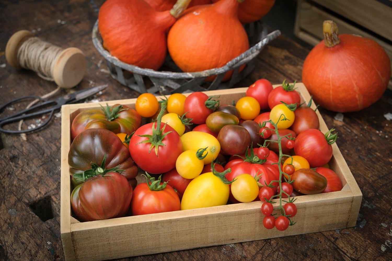Paradeiser-Tomaten-viele-Sorten-Ernte-2020