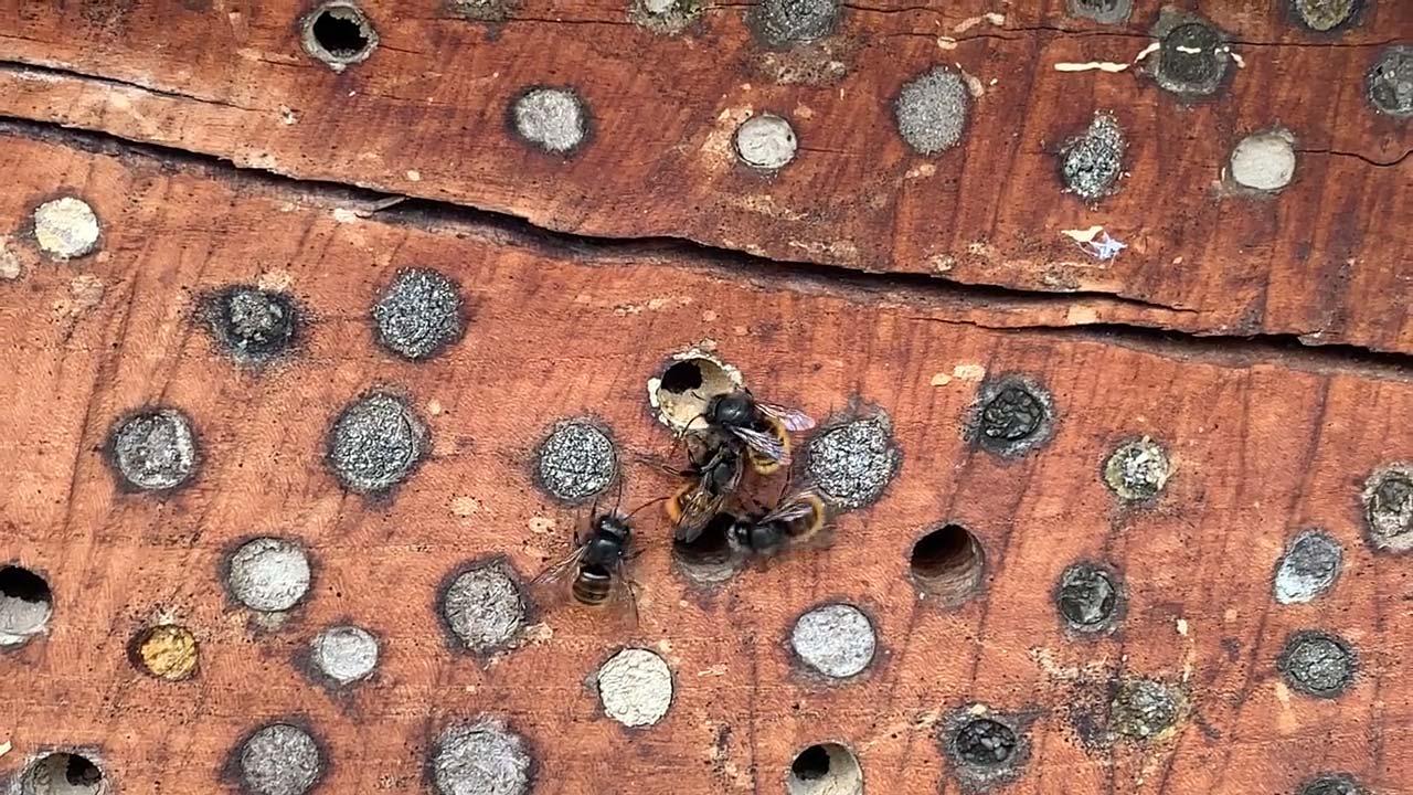Wildbienen-März-Sonnenstrahlen