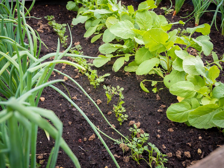 Hochbeet Saatbaender Gemüsepflanzen