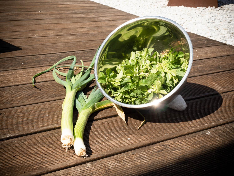 Lauch-und-Feldsalat-aus-dem-Hochbeet