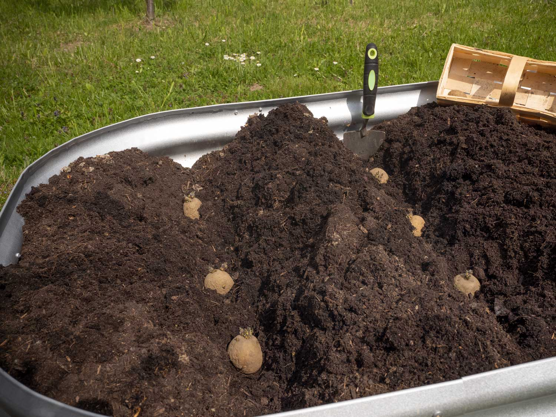 Wir pflanzen Erdäpfel im Hochbeet