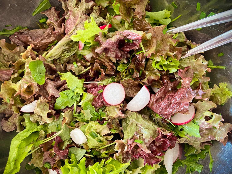 Erster frischer Salat aus dem Hochbeet